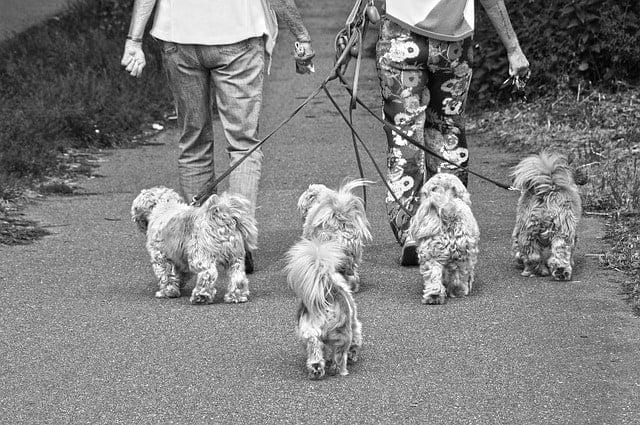 couple walking dogs black & white photo
