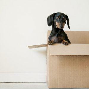 Pet Supplies Wiener Dog in Box