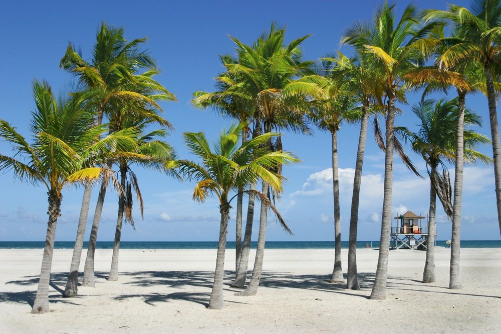 things to do in Florida - photo of palm trees on a beach