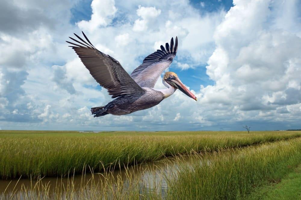 Grand Isle via Bonnie Taylor Barry Shutterstock