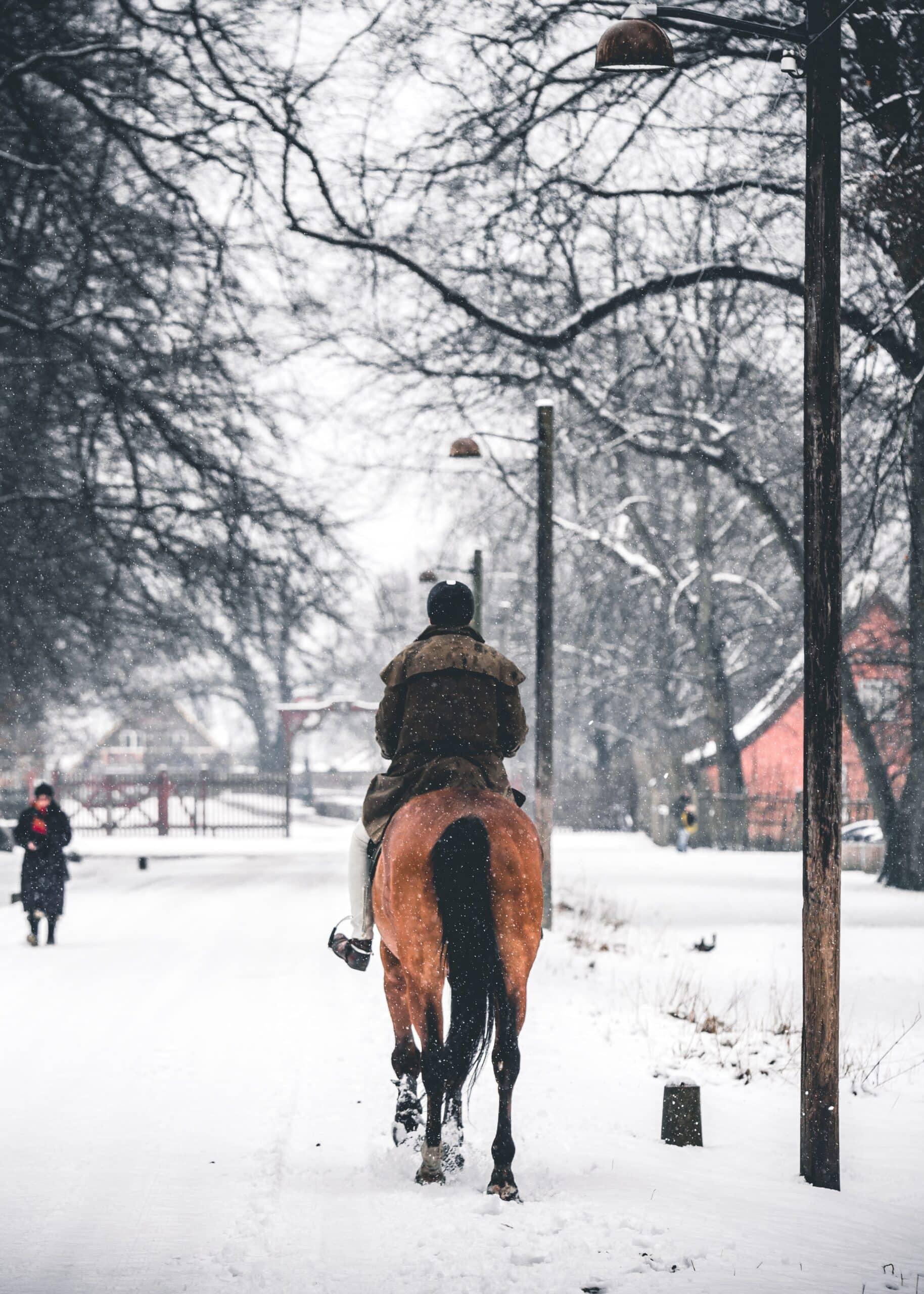 horse rides unsplash scaled